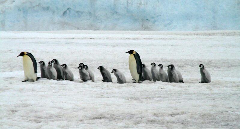 Google Disavow Tool Penguin Update